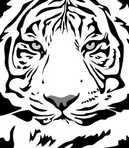 Como dibujar un tigre blanco