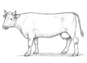 animales dibujos a lapiz