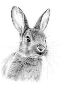 animales para pintar para niños