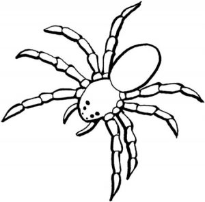 araña dibujo infantil