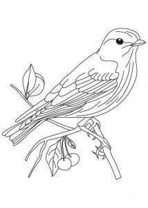 aves dibujos