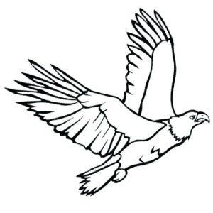 aves imagenes