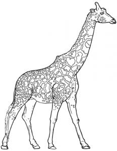 cómo se dibuja una jirafa