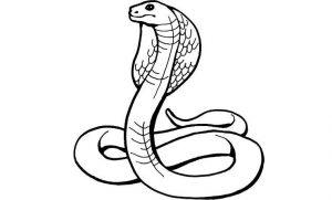 cómo se dibuja una serpiente