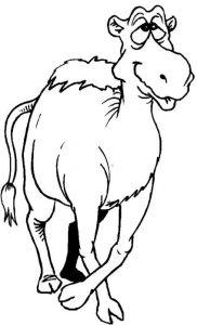 camello imagenes