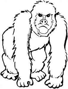 como dibujar a un gorila