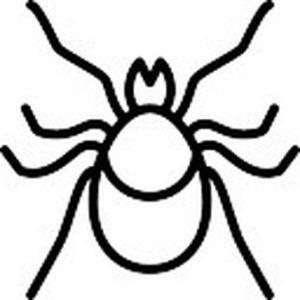 como dibujar arañas