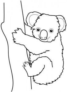 como dibujar un koala facil