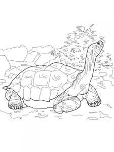 como dibujar una tortuga marina