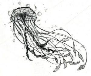 dibujar una medusa