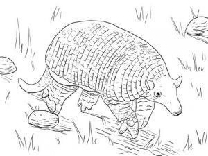 dibujo de armadillo para colorear
