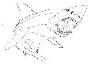 dibujo tiburon infantil