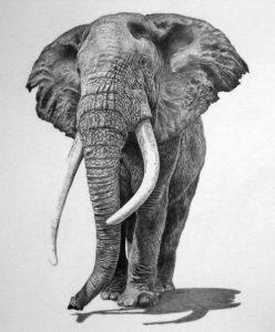 dibujos de animales y plantas
