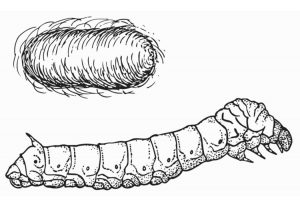 dibujos de gusanos para colorear