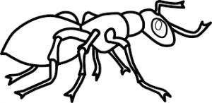 dibujos de hormigas para colorear