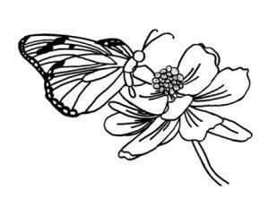 dibujos para pintar mariposas