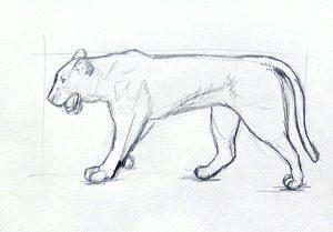 dibujos sobre animales
