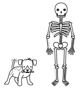 esqueleto humano dibujo