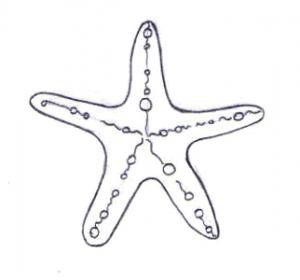 estrella de mar caricatura