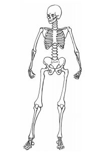 figura de esqueleto humano