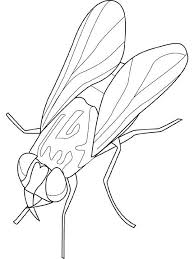 figuras de moscas