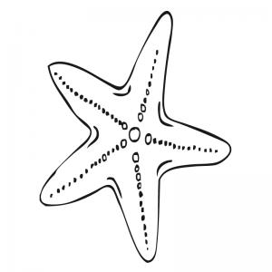 fotos de estrellas de mar