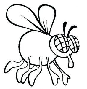 fotos de la mosca