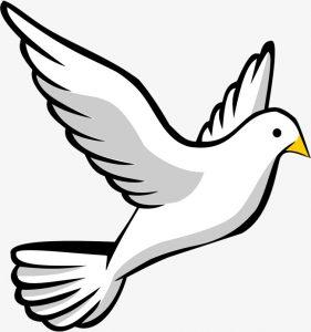 fotos de palomas