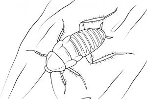 fotos insectos