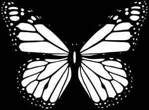 fotos mariposas