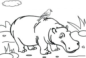 hipopotamo dibujo