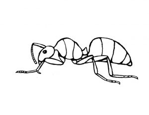 hormiga caricatura