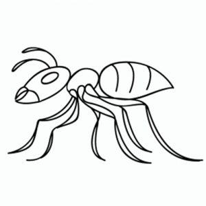 hormiga facil de dibujar