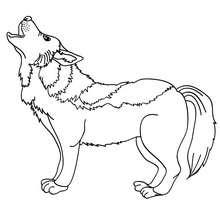 imagen de lobo