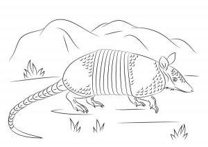 imagenes de armadillos para dibujar