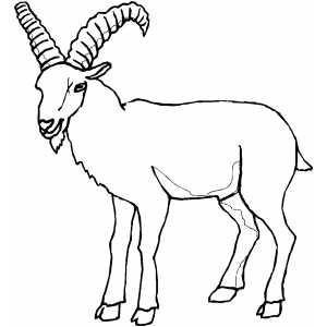 imagenes de cabras para colorear