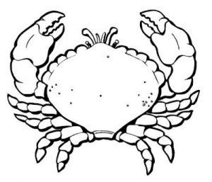imagenes de cangrejos en caricatura