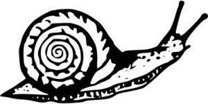 imagenes de caracoles para imprimir
