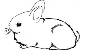 imagenes de conejos animados