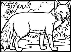 imagenes de el zorro