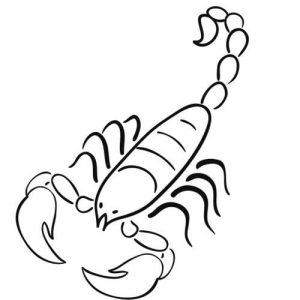 imagenes de escorpiones para descargar