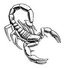 imagenes de escorpiones para dibujar