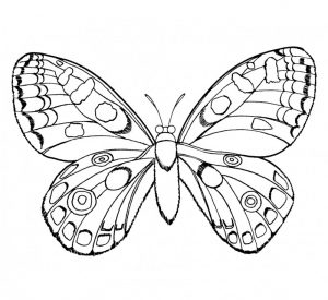 imagenes de insectos para imprimir