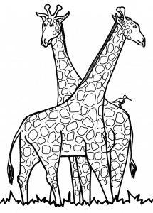 imagenes de jirafas infantiles
