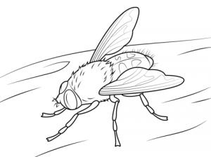 imagenes de moscas animadas