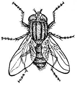 imagenes de moscas chistosas