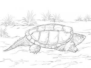imagenes de tortugas para colorear