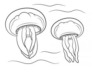imagenes de una medusa para colorear