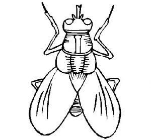 imagenes de una mosca animada