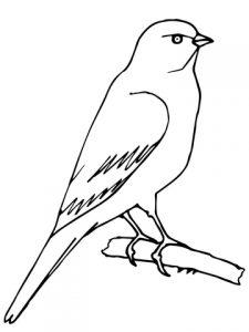 imagenes para colorear canarios